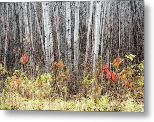 Metal Print featuring the photograph Late Fall Splendour by Rob Huntley