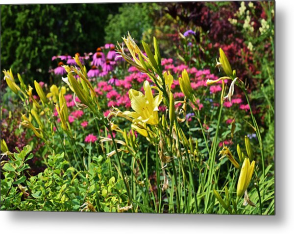 Late July Garden 1 Metal Print