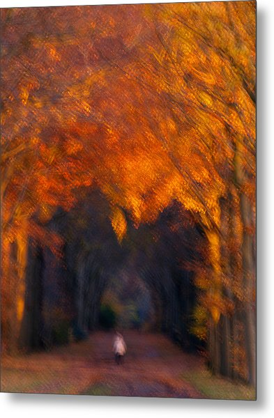 Metal Print featuring the photograph Late Nature Walk. by Luc Van de Steeg