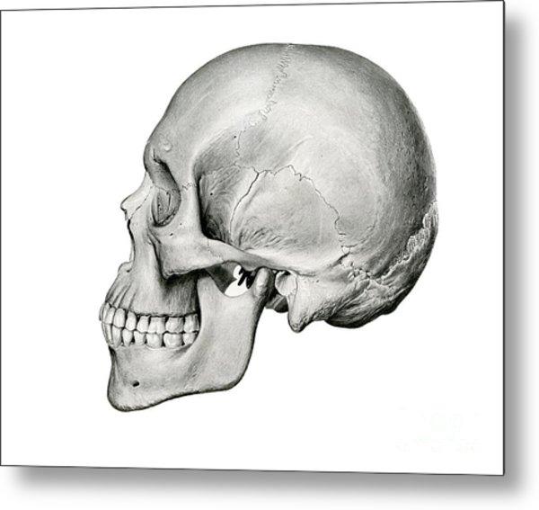 Lateral View Of Human Skull Metal Print