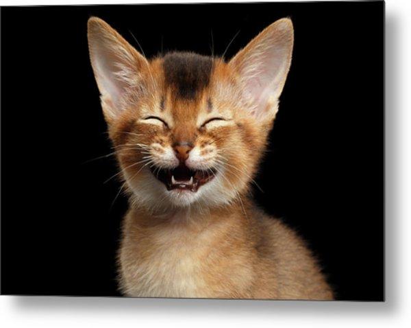 Laughing Kitten  Metal Print