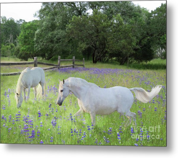 Lavender Pastures Metal Print