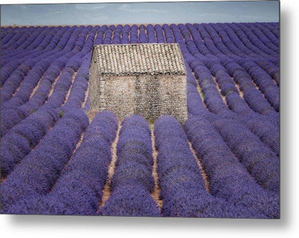 Lavendel Metal Print