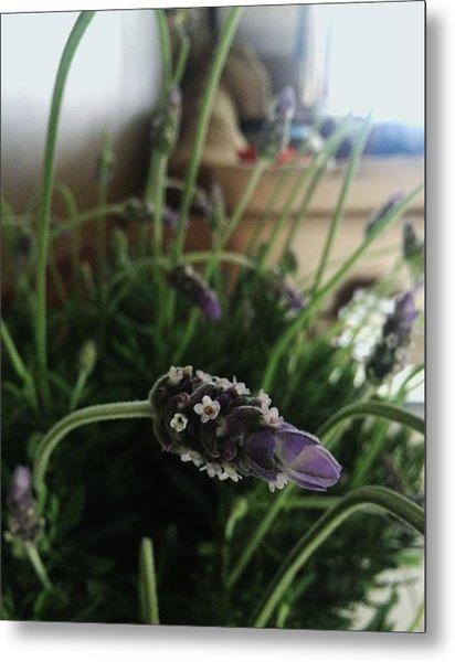 Lavender Energy Metal Print by Tara Miller