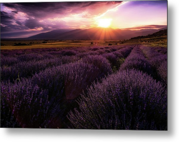 Lavender Field At Sunset Metal Print