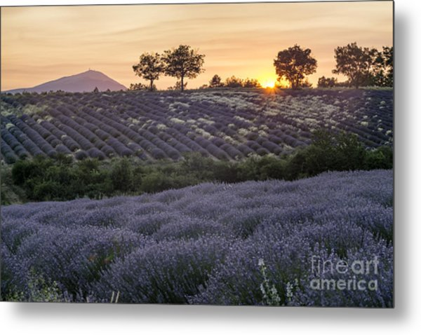 Metal Print featuring the photograph Lavender Field Provence  by Juergen Held
