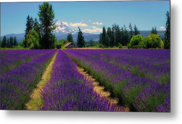 Lavender Valley Farm Metal Print