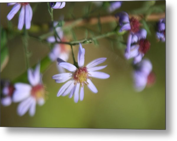 Lavender Wildflowers Metal Print by Gregory Jeffries