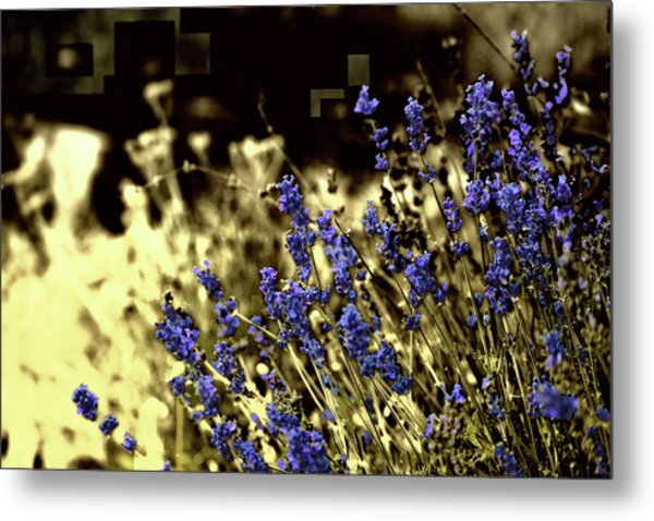 Lavender Yellow Metal Print