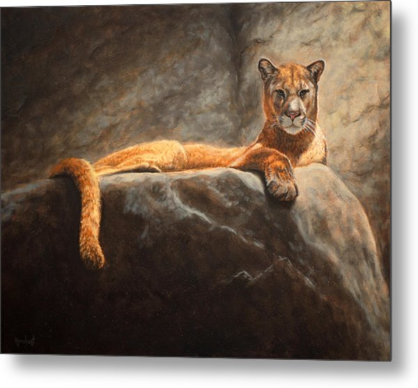 Laying Cougar Metal Print