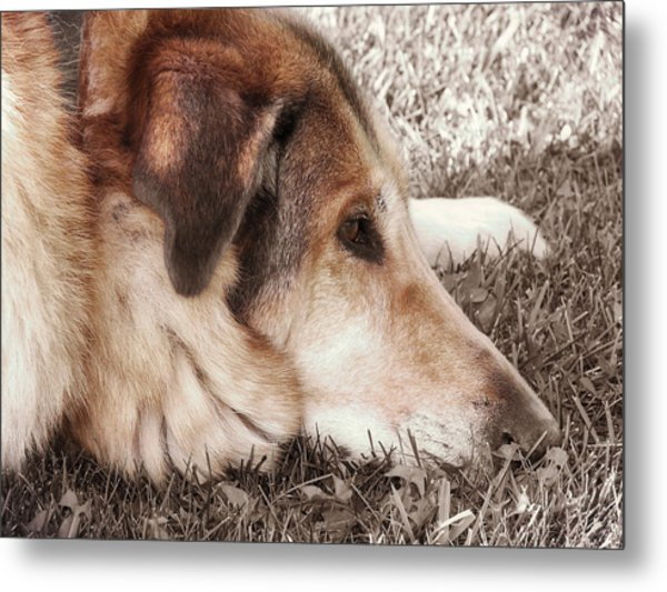 Lazy Day Metal Print by JAMART Photography