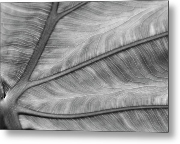 Leaf Abstraction Metal Print