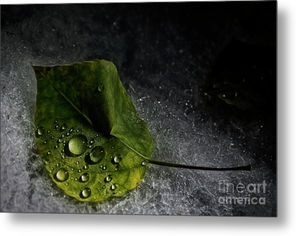 Leaf Droplets Metal Print