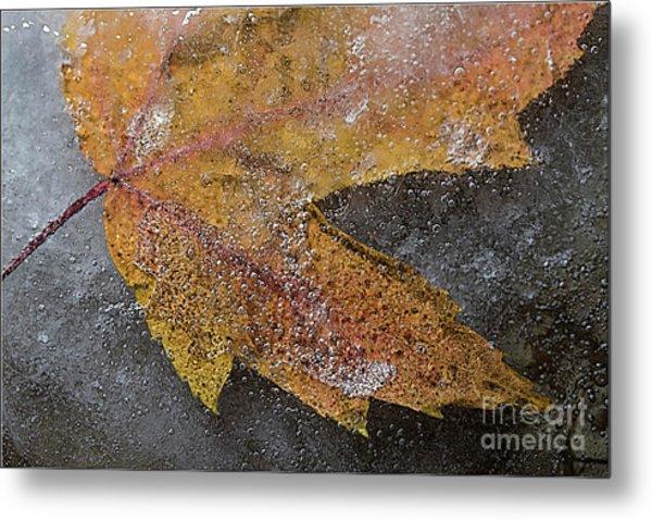 Leaf In Ice 3 Metal Print by Jim Wright