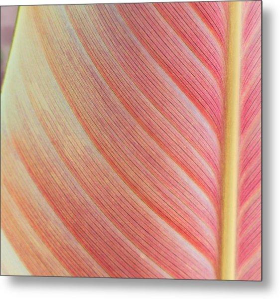 Leaf In Pink  Metal Print