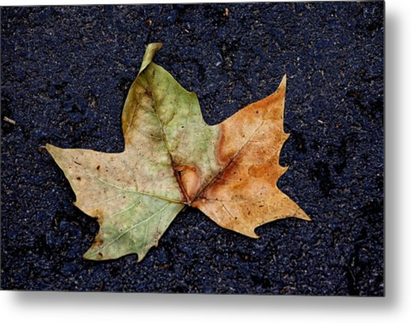 Leaf In The Road Metal Print by Robert Ullmann