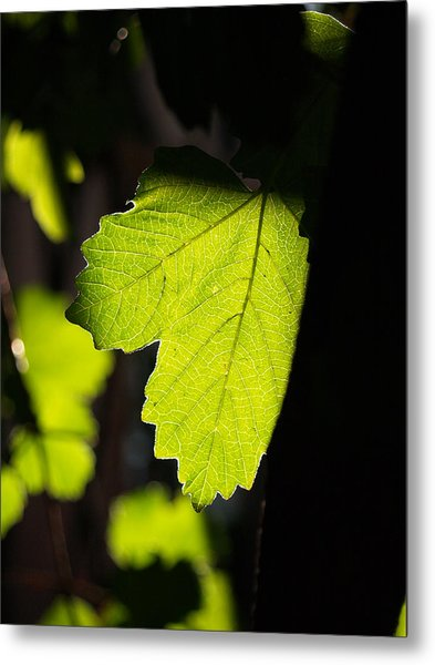 Leaf Light I Metal Print