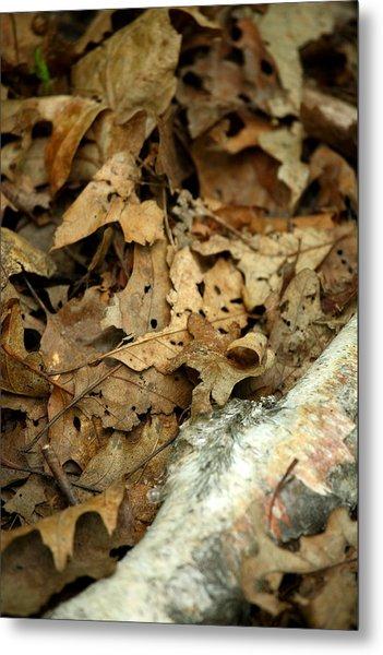 Leaf Litter Metal Print by Mark Platt