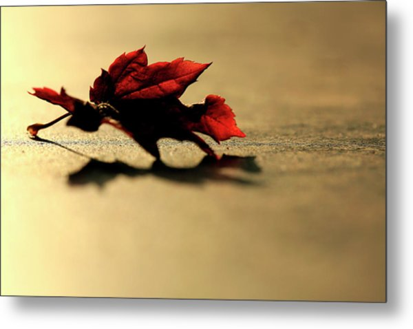 Leaf On The Garage Floor Metal Print