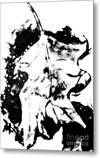Leaf Study Black And White Metal Print by Jamey Balester