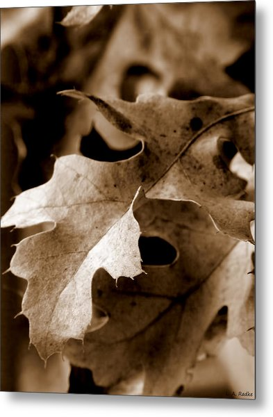 Leaf Study In Sepia IIi Metal Print