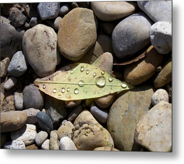 Leaf With Water Droplets In Rocks Metal Print