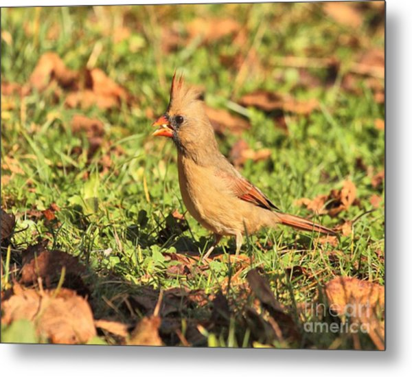 Leafy Cardinal Metal Print