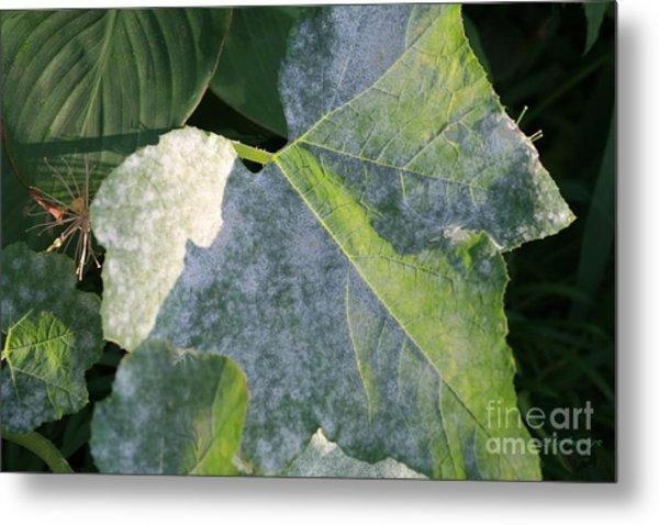 Calming Leafy Glade Metal Print