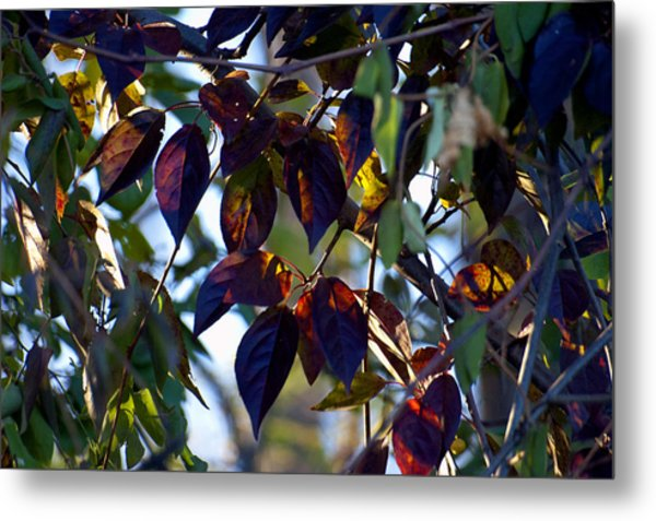 Leafy Light Show Metal Print by Ross Powell