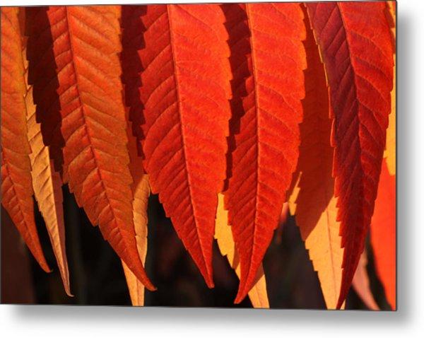 Leafy Valance Metal Print