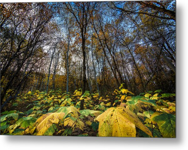 Leafy Yellow Forest Carpet Metal Print