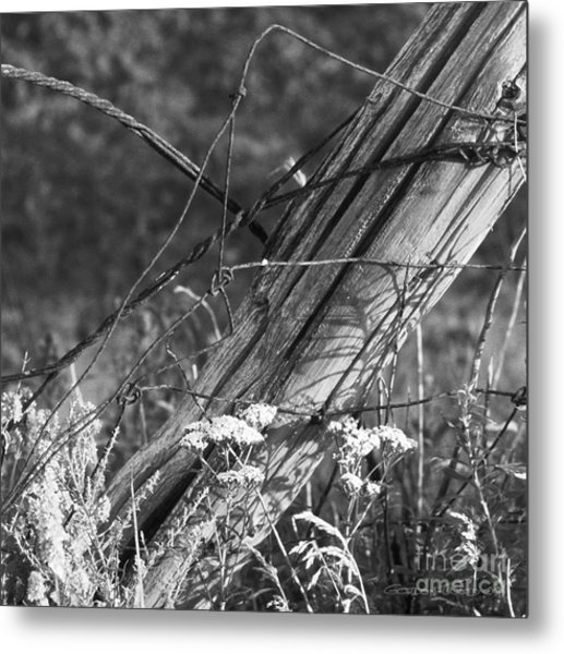 Leaning Farm Fence Post Amongst Weeds In Evening Sun Metal Print by Gordon Wood