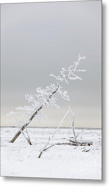 Leaning Tree Metal Print by Tim Grams