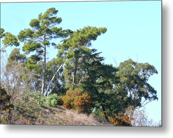 Leaning Trees On Hillside Metal Print