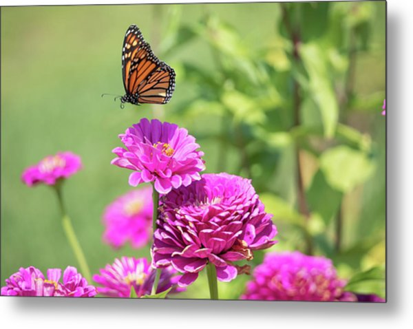 Leaping Butterfly Metal Print