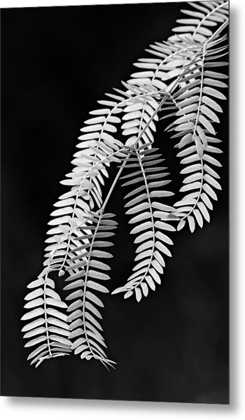 Leaves-1-st Lucia Metal Print