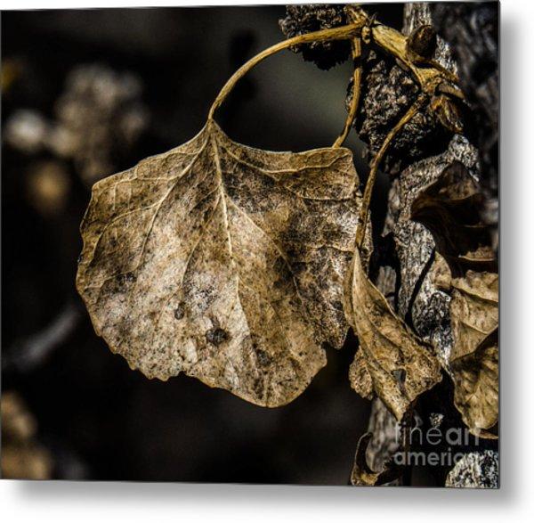 Leaves 4 Metal Print