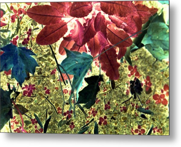 Leaves And Berries - Inversed Metal Print by Randy Muir