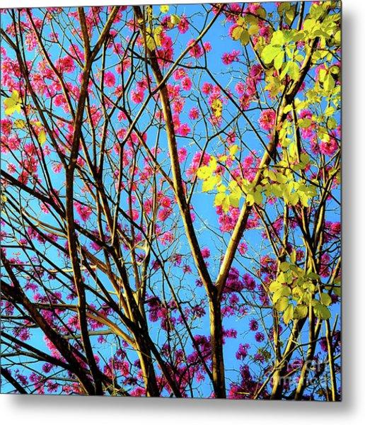 Leaves And Trees 980 Metal Print