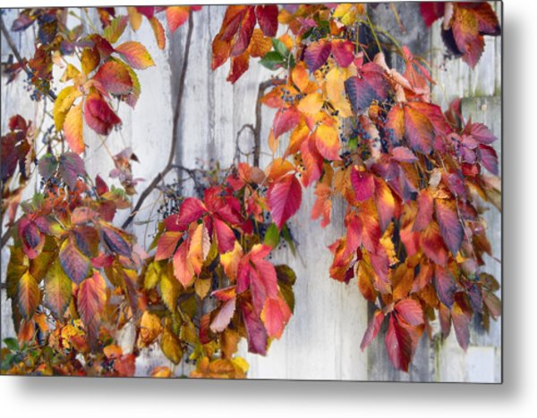 Leaves And Vines Metal Print by Donald Schwartz