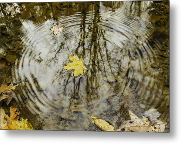 Leaves And Water Metal Print