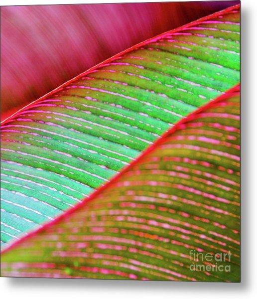 Leaves In Color  Metal Print
