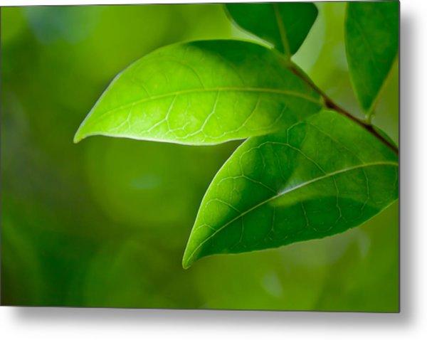 Leaves Of Green Metal Print