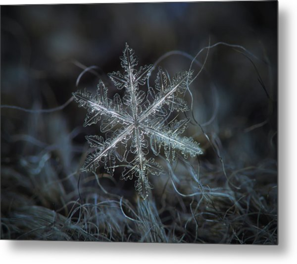 Leaves Of Ice Metal Print