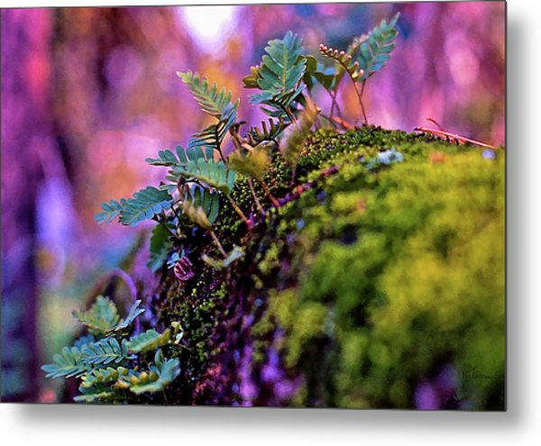 Leaves On A Log Metal Print