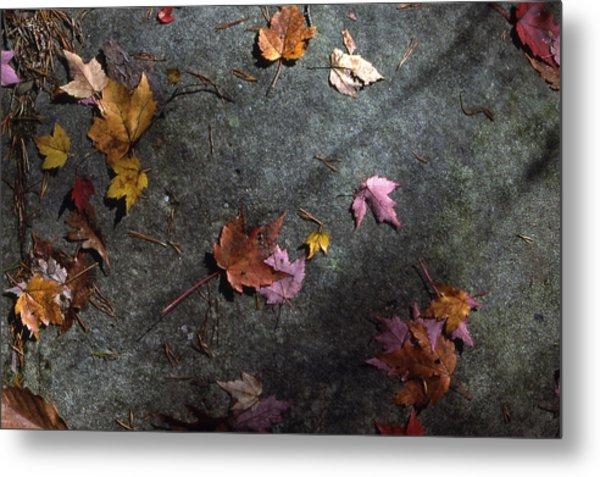 Leaves On Stone Metal Print by Randy Muir