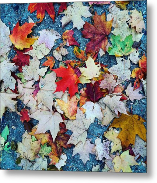 Leaves On The Sidewalk Metal Print by Robert Nguyen