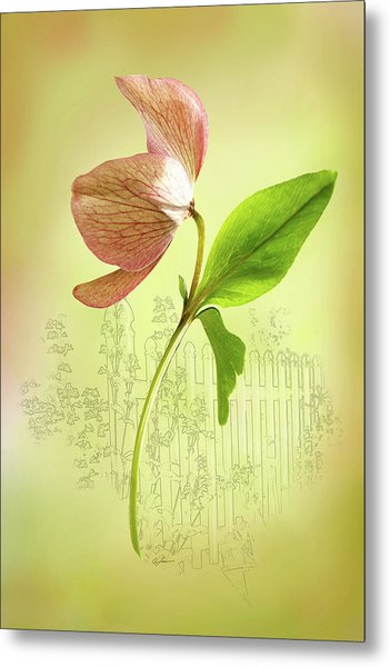 Lenton Rose 1 Metal Print