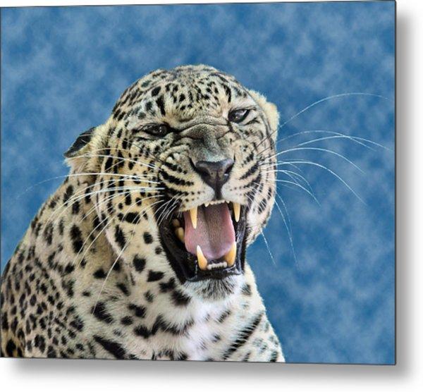 Leopard  Metal Print by Keith Lovejoy