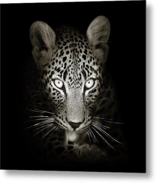 Leopard Portrait In The Dark Metal Print